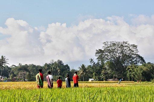 Farmers, Brothers, Boys, Asian Farmer, Asia, Family