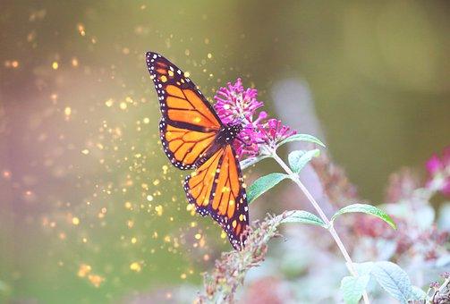 Monarch, Butterfly, Garden, Butterflies, Insect, Nature