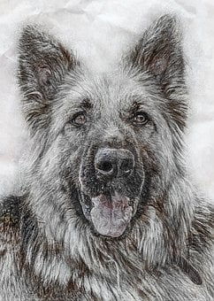 Animal, Dog, German Shepherd Dog
