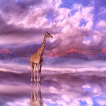 Giraffe, Animal, Dinosaur, Herbivores, Langhals
