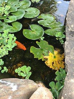 Koi, Pond, Fish, Asian, Goldfish, Soothing, Calm