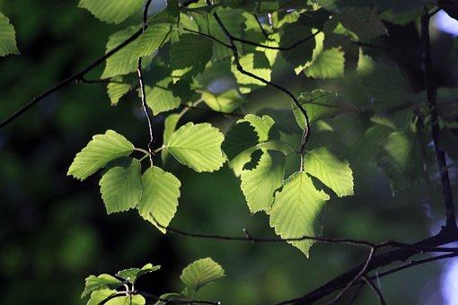 Leaves, Backlight, Wood, Nature, Plants, Green, Leaf