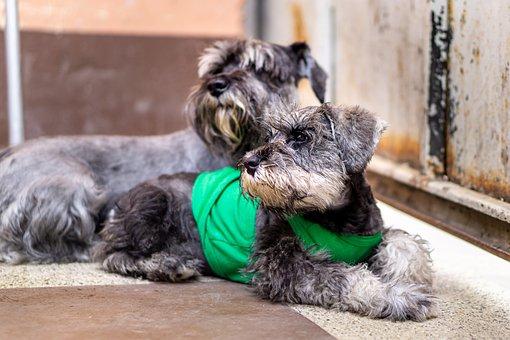 Animal, Puppy, Dog, Labrador, Light Brown, Pet