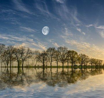 Trees, Lake, Reflection, Water, Nature, Summer, Tree