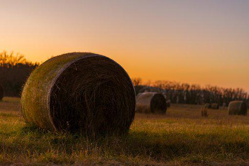 Hay Bales, Field, Hay, Agriculture, Landscape, Rural