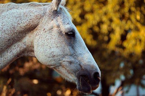Horse, Head, Horse Head, Mold, Mane, White Horse