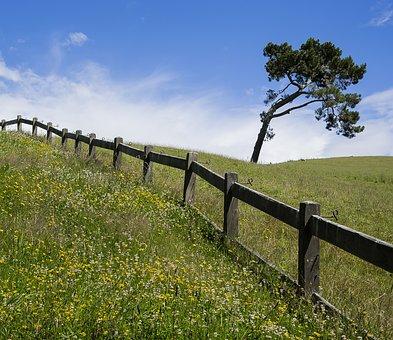 New Zealand, Tree, Nature, Landscape, Outdoors, Scenic