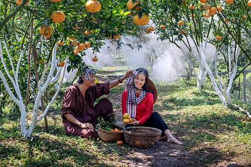 Garden, Nature, Vietnam, Green, Scenery, Beauty, Love