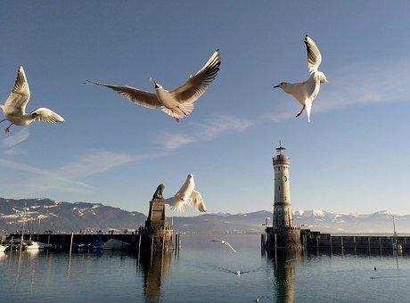 Gulls, Lindau, Lake Constance, Lighthouse, Port