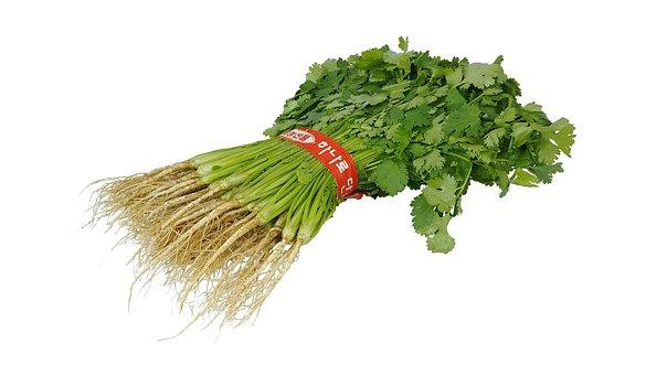 Cilantro, High, Green, Vegetable, Seasoning, Food