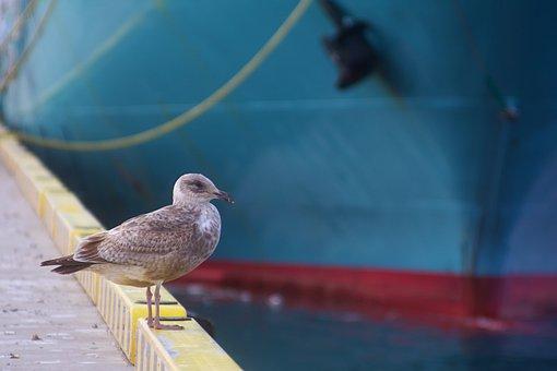 Seagull, Sea, Harbor, Nature, Ship, Bird