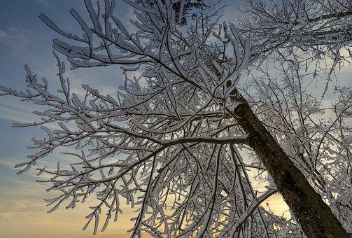 Twilight, Winter, Tree, Snow, Nature, Sky, Frost