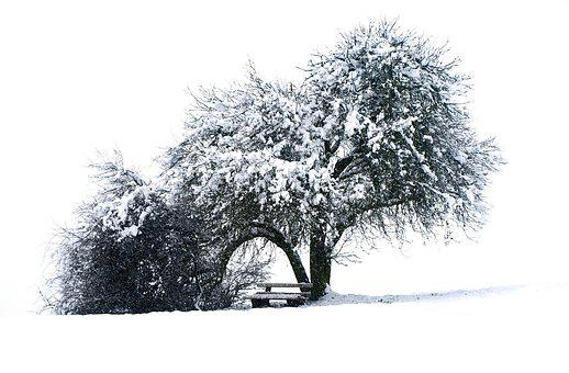 Tree, Bank, Winter, Snow, Nature, Landscape, Wintry