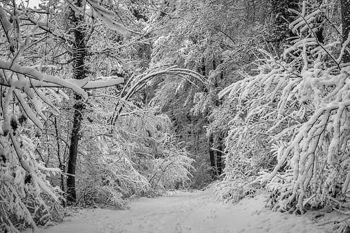 Winter, Forest, Glade, Snow, Nature, Trees