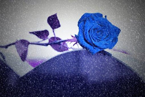 Blue Rose On Grave, Snowy, Lost Love, Heart Gravestone