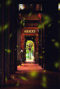 Taiwan, Tree, Tall, Temple, Old Street