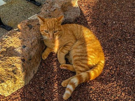 Cat, Pet, Kitten, Animal, Animals, Tomcat, Eyes, Fur