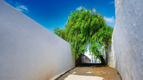 Lanzarote, Tree, Street, Wall, White
