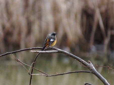 Animal, Forest, Wood, Bird, Wild Birds