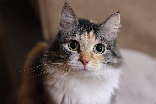 Cat, Animals, Portrait, Happiness, Love, Pet, Favorite