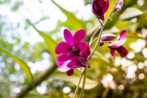 Purple Orchids, Orchid Flowers, Orchid, Purple, Bloom
