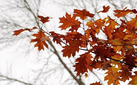 Leaves, Rust, Branch, Tree, Autumn, Forest, Nature