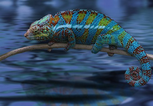 Chameleon, Lizard, Reptile, Animal, Calango, Exotic
