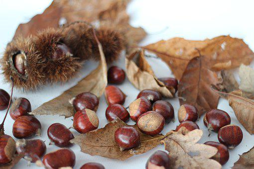 Chestnuts, Autumn, Leaves, Brown, Bright, Nature