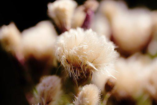 Flowers, Faded, Flower, Plant, Close Up, Seeds, Flora