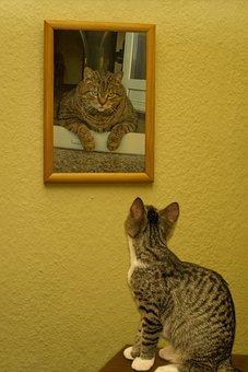 Cat, Small, Young, Cute, Watch, Katzenoma, Pedigree