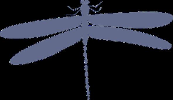 Dragonfly, Damselfly, Darning Needle