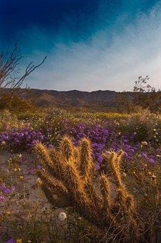 Desert, Cactus, Spring, Bloom, Nature, Plant, Succulent