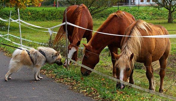 Dog, Horses, Encounter, Coupling, Curious, Mane