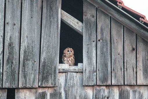 Owl, Plumage, Animal World, Animal, Raptor, Eagle Owl