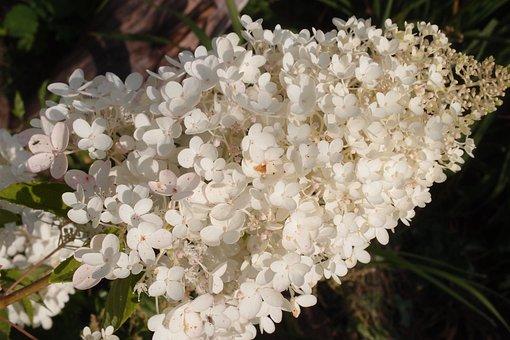 Flower, Garden, Dacha, Bloom, Flora, White, Beautiful