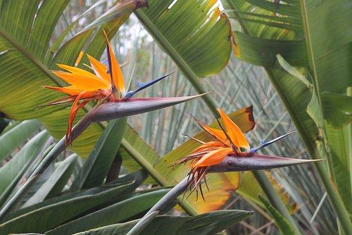 Botany, Flowers, Plant, Exotic, Palm Trees