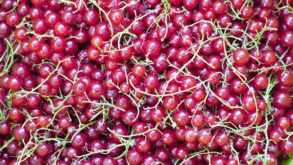 Currant, Red, Fruit, Food, Berries, Healthy, Mature