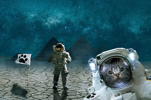 Cat, Fantasy, Animal, Space, Pyramids, Gizeh
