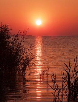 Sunrise, Dawn, Lake Balaton, Hungary, Reed, Sunlight