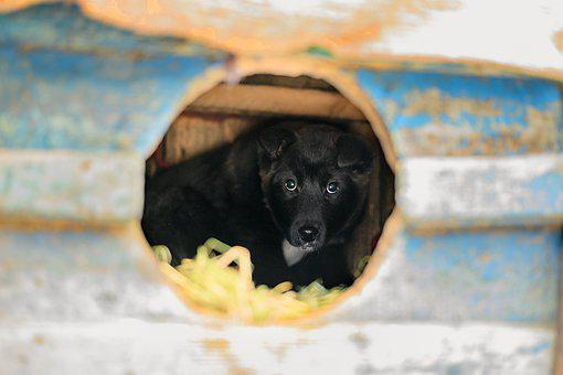 Puppy, Black, In, Booth, View