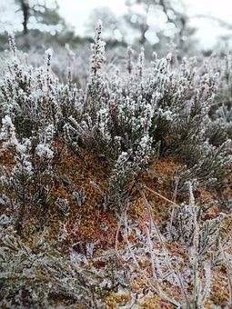 Swamp, Frost, Winter, Nature, Flora
