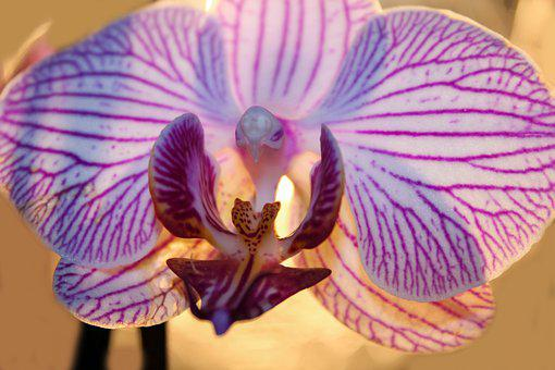 Orchid, Flower, Plant, Blossom, Bloom, Nature, Flora