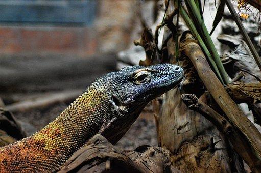 Zoo, Lizard, Dragon, Reptile, Iguana, Animal