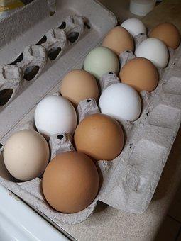 Eggs, Farmers Market, Fresh, Food, Eat, Self-marketers