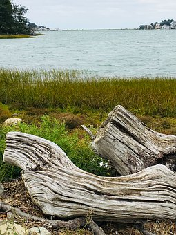 Wood, Shore, Water, Coast, Nature, Landscape, Outdoor