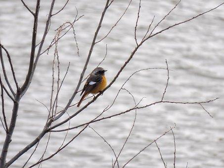 Animal, River, Wood, Bird, Wild Birds