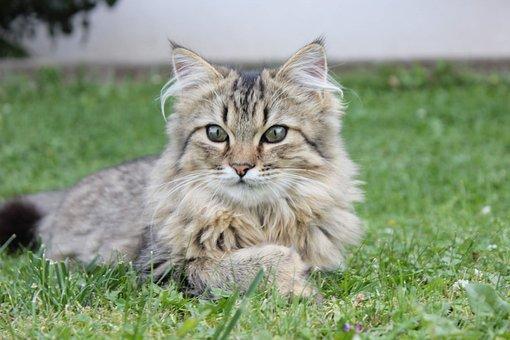 Cat, Garden, Pet, Kitten, Grass, Portrait, Young
