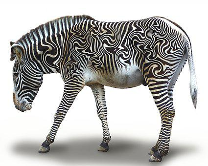 Zebra, Striped, Africa, Animal, Stripes, Animal World