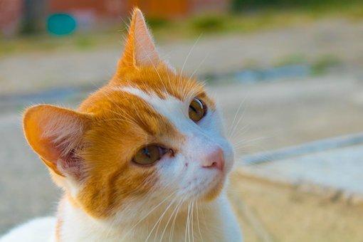 Cat, Kitten, More, Pet, Animals, Feline, Cute, Adorable