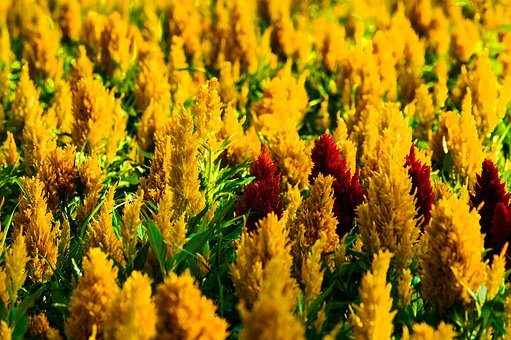 Landscape, Fresh, Background, Flora, Beauty, Beautiful